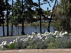 Lavender and roses beside a small lake.  Find Bellville Cape Town accommodation with its beaches and sunshine on our Bellville Cape Town accommodation page.