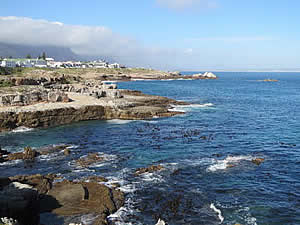 The coastline of Hermanus is mostly cliffs and rocks with a succession of small bays.  It is this feature which has made Hermanus the premier whale watching venue in South Africa.  Find Hermanus accommodation on our Hermanus accommodation page.