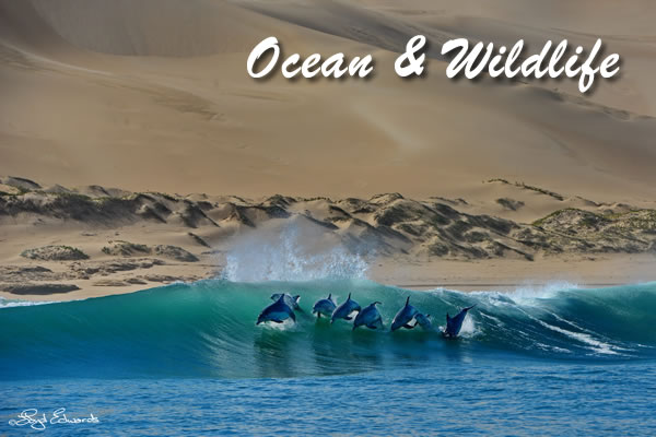 Ocean and Wildlife in Port Elizabeth