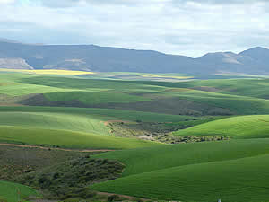 This region is rich in agriculture and affored many pleasant vistas along the road.  Find Riversdale accommodation on our Riversdale accommodation page.