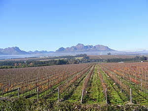 Stellenbosch is the heart of South Africa's most famous wine growing region and vineyards and wineries cover the landscape against the background of mountains.  Find Stellenbosch accommodation on our Stellenbosch accommodation page.