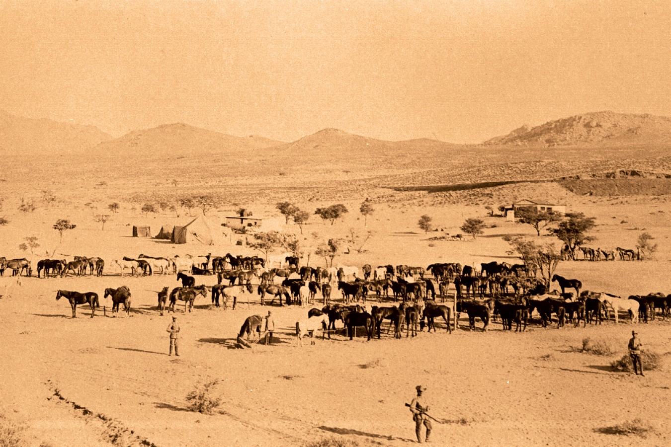 Horses of the German colonial forces near the city Aus. Source: National Archive of Namibia
