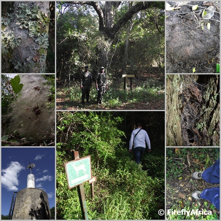 Hiking the Bushbuck Trail in The Island Nature Reserve