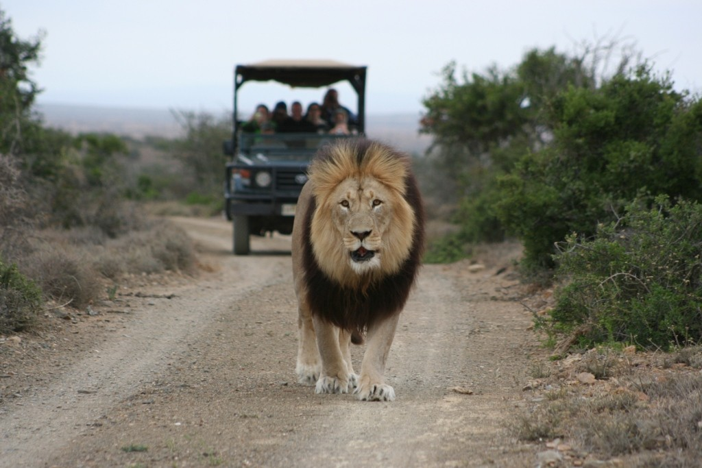Kuzuko Lodge - Big Five Game Reserve