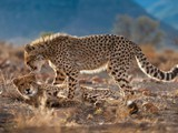 Samara Game Reserve Game Viewing Graaff-Reinet Activities
