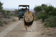 Kuzuko Lodge - Big Five Game Reserve Jansenville Accommodation
