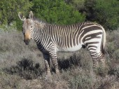 Mountain Zebra National Park Cradock Tourist Attractions