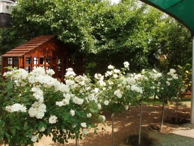 Rose-Cottage, Gariep Dam Colesberg Accommodation