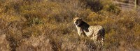 african_game_lodge_montagu_07.jpg