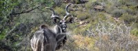 african_game_lodge_montagu_08.jpg